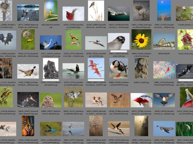 Audubon's Photo Editor Discusses the 2012 Photography Awards
