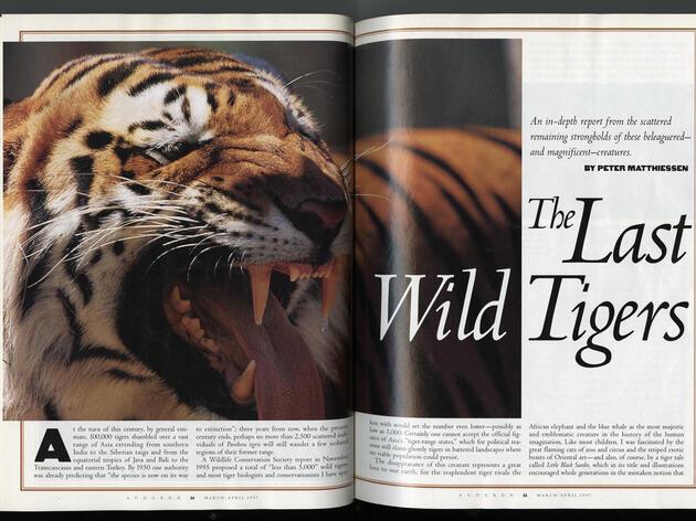 The Last Wild Tigers