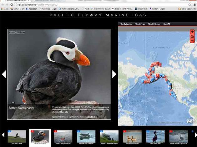 Alaska to Baja: Audubon offers a new way to explore the world of seabirds