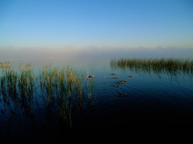 A Big Win for Minnesota's Wetlands