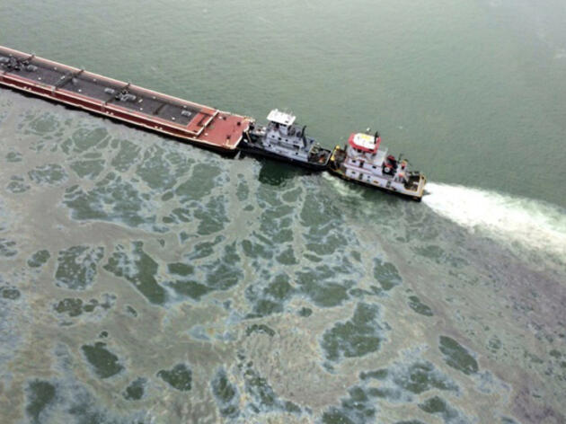 Large Oil Spill in Galveston Bay Threatens Tens of Thousands of Birds