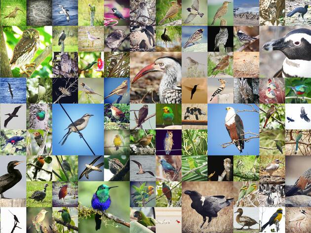 The Final Species List in Taxonomic Order