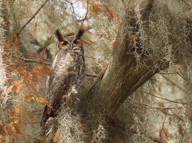 Blurred Lines in the Audubon Magazine Photo Awards
