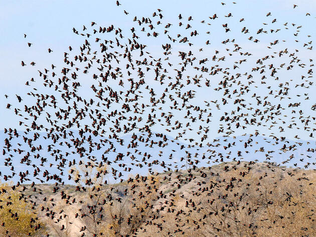 117th Christmas Bird Count U.S. High Counts