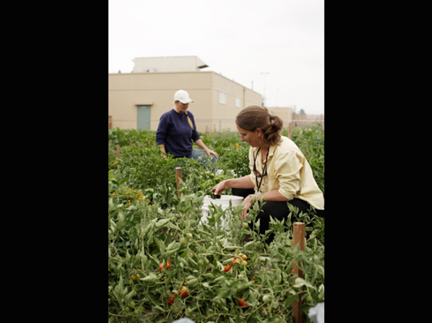 Inmates Take Up Organic Gardening