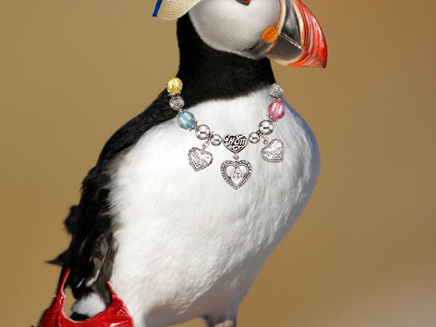 Celebrate Mother's Day with Puffins