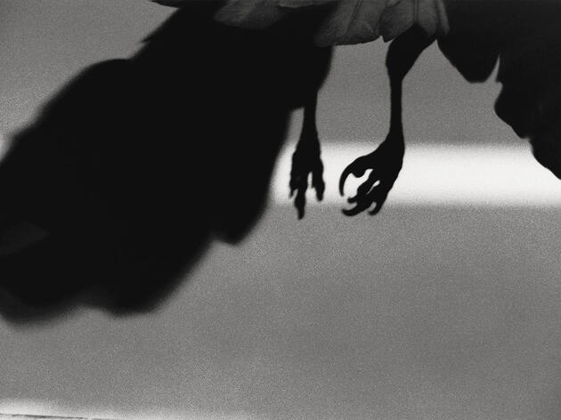 'Ravens,' One of the 20th Century's Best Photography Books, Is Back on Shelves