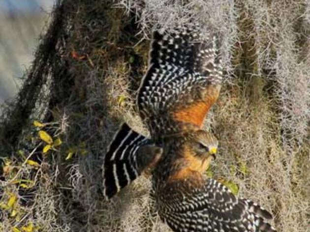 2011 Audubon magazine photo Grand Prize winner Carol Graham Fryer