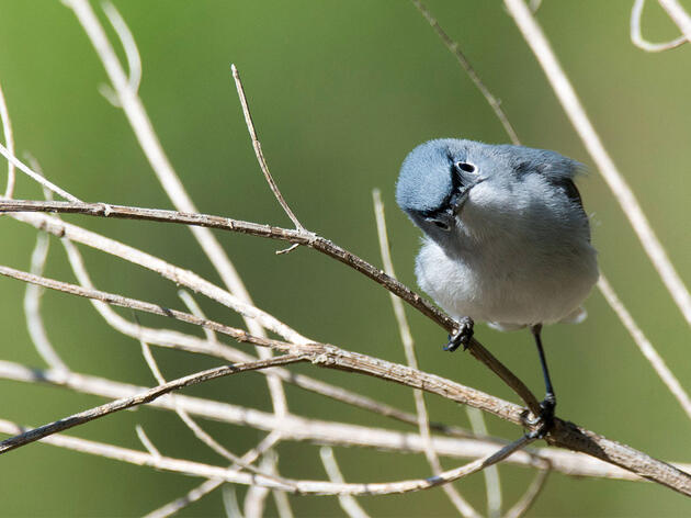 BuzzFeed Asked a Bunch of Bird Questions—and We Answered