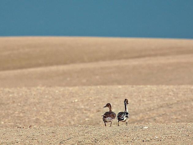Meet Eight Birds That Depend on the Farm Bill