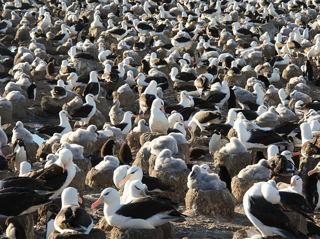 Secrets of Scat: What an Albatross's Diet Reveals About Fisheries