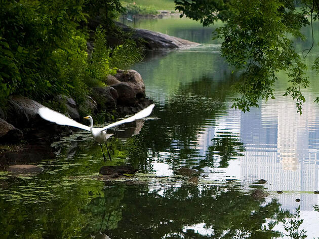 The Insider's Guide to Birding in Central Park, New York City