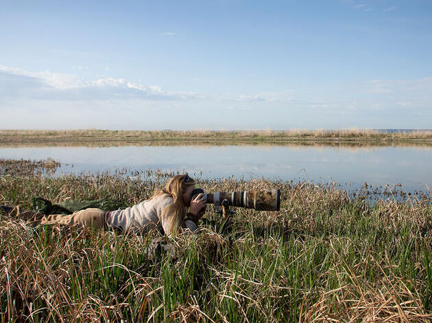 For Spectacular Shorebird Shots, Go Low