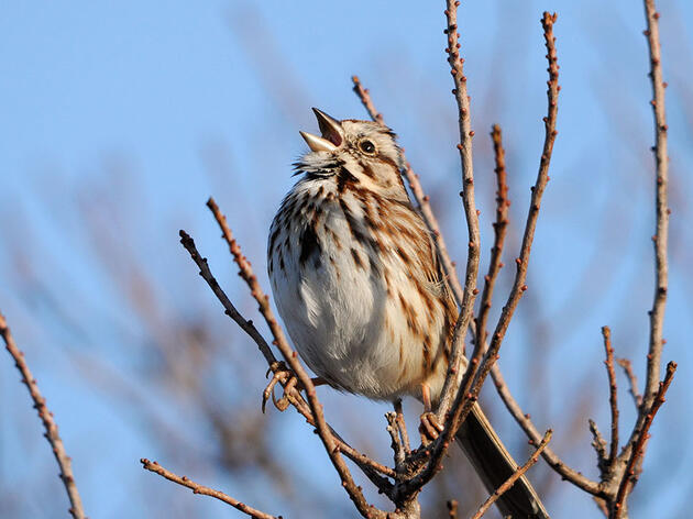 A Beginner's Guide to Common Bird Sounds and What They Mean