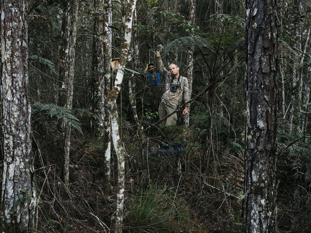 After using the double knocker and feedback call of the Ivory-billed Woodpecker, Martjan Lammertink waits to hear any response in Humbolt National Park. Greg Kahn