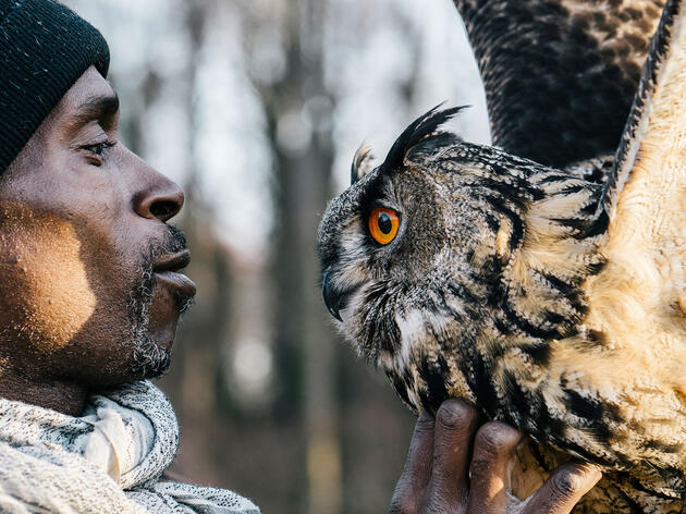 How Falconry Turned One Man's Life Right-Side Up