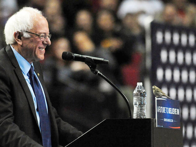 Democratic presidential candidate Bernie Sanders smiles as a House Finch lands on his podium during a rally at the Moda Center in Portland, Oregon. Steve Dykes/AP