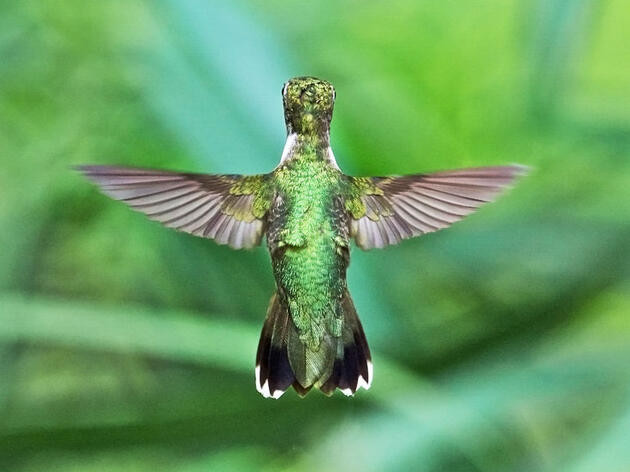 Hummingbirds Inspire Drone Design