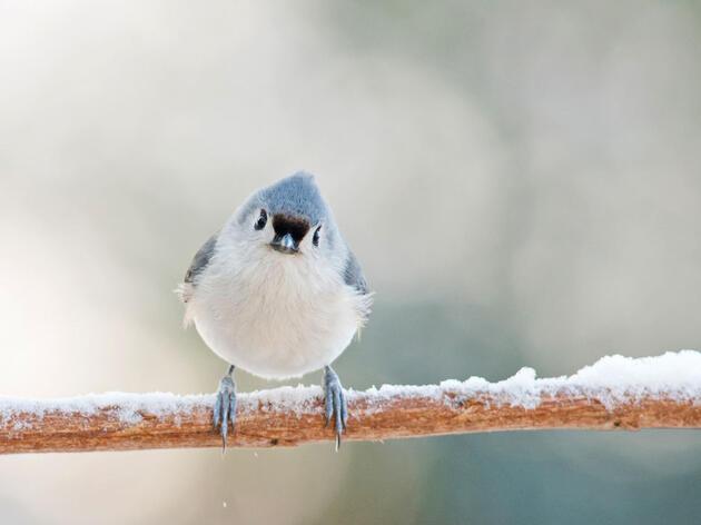 Dame refugio: ¿Cómo sobreviven las aves a una tormenta de nieve?