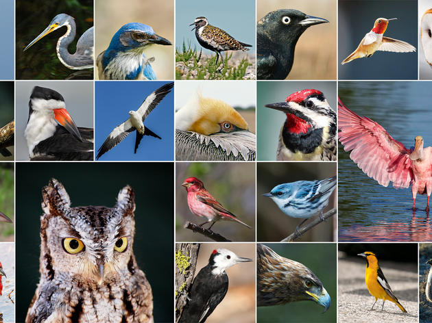 These are some of the 314 North American birds threatened by climate change. You can find the species and photo credits here.
