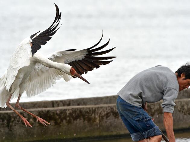 Meet the Bird With a Full-Time Bodyguard