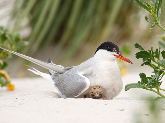 Do's and Don'ts of Nest Photography