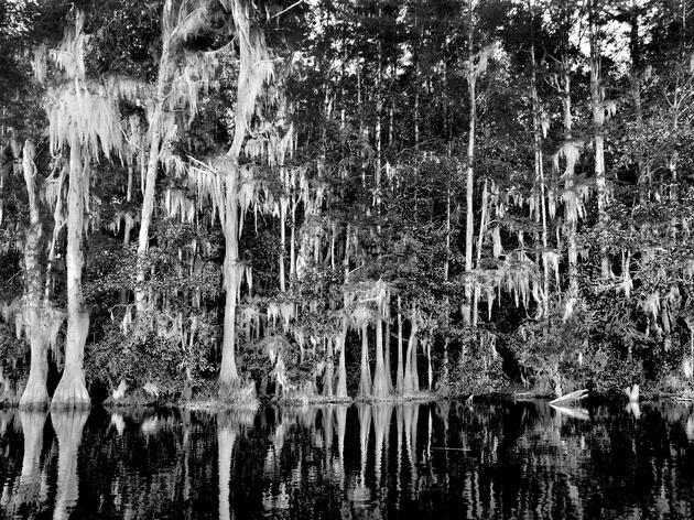 Haunting Swamp, Fargo, Georgia. Pigment print by Alexandra Penney