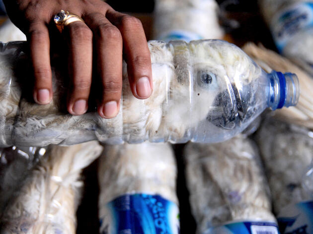 A policeman holds a water bottle used to smuggle a Yellow-crested Cockatoo in Surabaya, Indonesia, on May 4. Risyal Hidayat/REUTERS/Antara Foto