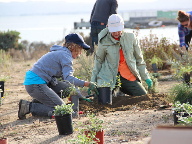 Golden Gate Audubon Society Conservation Project Manager and Volunteer Coordinator Noreen Weeden helps a volunteer plant native plants at Pier 94 in San Francisco. Mallory Pickett