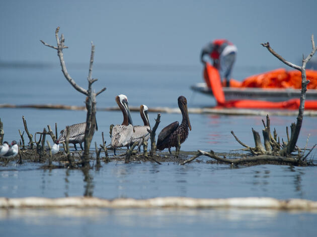 Workers trying to protect a pelican nesting colony during the BP oil spill in 2010. Kim Hubbard/Audubon