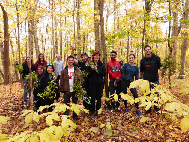 Volunteers removed invasive bush honeysuckle from Hueston Woods State Nature Preserve, an old-growth forest in Ohio that's home to warblers and other birds. Gail Reynolds/Audubon