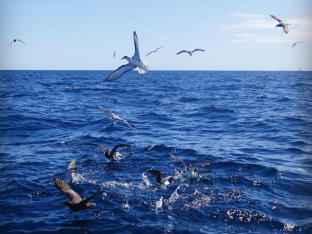 Day 355: Seabirds and Stunning Scenery