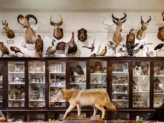Skeleton Crew: The Bones and Bodies Behind RISD's Nature Lab