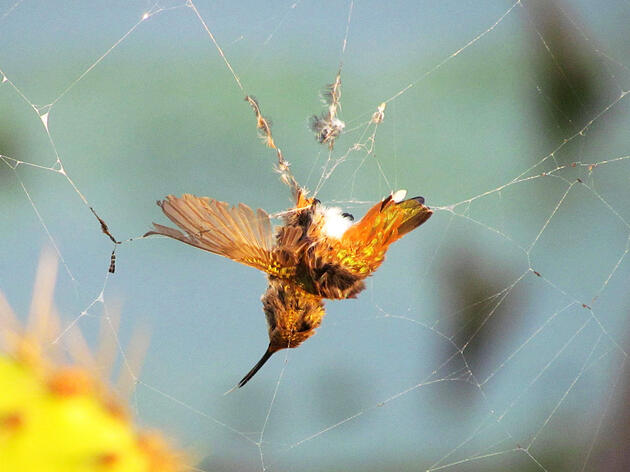 Which Animals Prey on Hummingbirds?