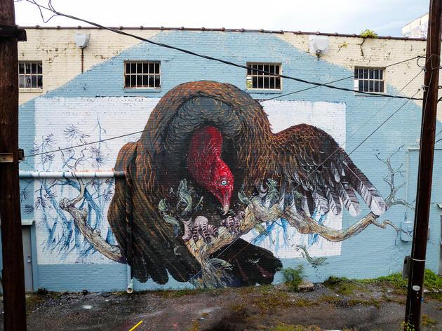 Turkey Vulture, Charleston, South Carolina. Jessica Stewart