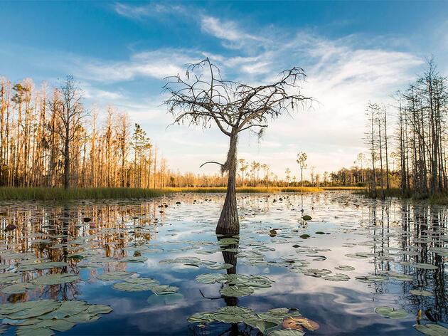 Proposed Georgia Mine Next to Okefenokee Swamp Raises Alarms