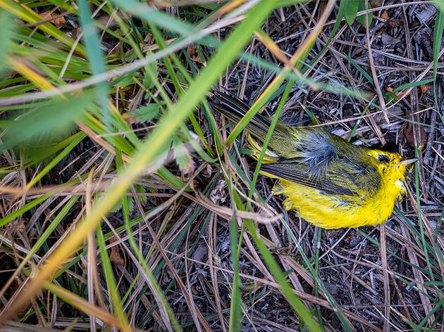Study: Starvation and a Freak Snow Storm Caused the Southwest's Mass Bird Die-Off
