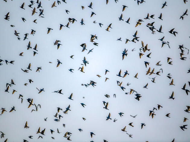 Artificial Lighting May Shift Bird Migration by More Than a Week, New Research Says