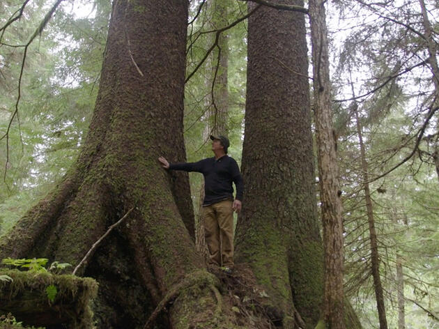 One Tree at a Time: Voices for Tongass