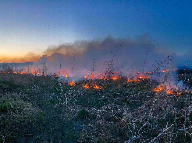 Another Consequence of Suppressing Wildfire: Trees Are Invading the Prairie