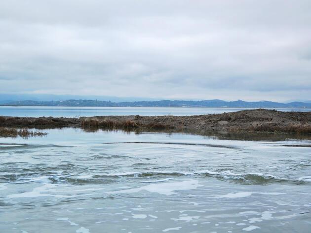 Tidal flow restoration in Tolay Creek, San Pablo Bay National Wildlife Refuge. Andrea Jones/Audubon