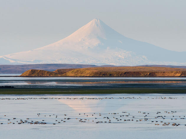 Updated: Trump Admin Halts Its Push for a Road Through Alaska's Izembek Refuge