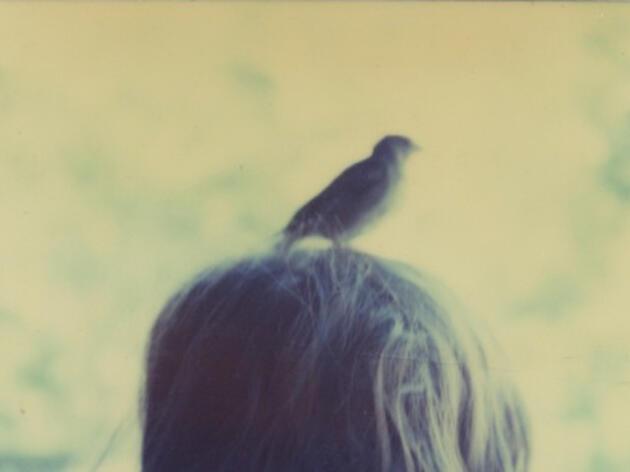 Memories of Long-Ago Birds