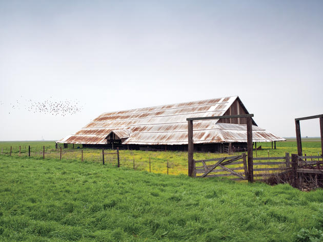 A grassland located on a private ranch near the Yolo Bypass Wildlife Area is a prime location to search for the sometimes elusive long-billed curlew. (Photo: Brown W. Cannon III)
