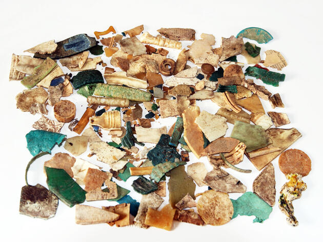 Plastic Ingestion Killing Shearwaters