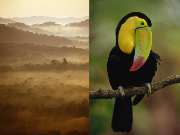 Beautiful and Bird-Filled Belize