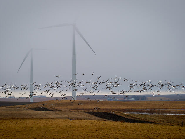 Green Energy: Can We Save the Planet and Save Birds?