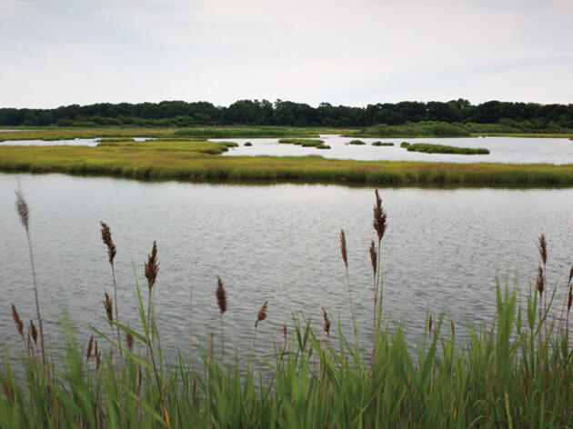 A Boost for Long Island Sound