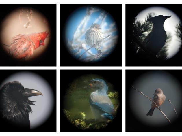 Birds Through a Spotting Scope