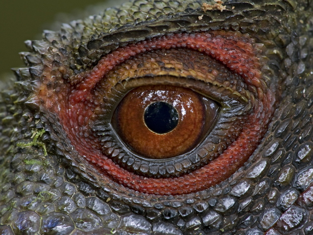 Win a Copy of 'Relics': A Gorgeous New Photo Book About Creatures That Have Existed for Millennia
